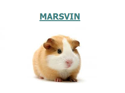 • Marsvin